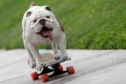 dog-tricks2